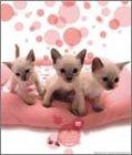 ミルキーフェイス(桃猫) 2005年度 カレンダー
