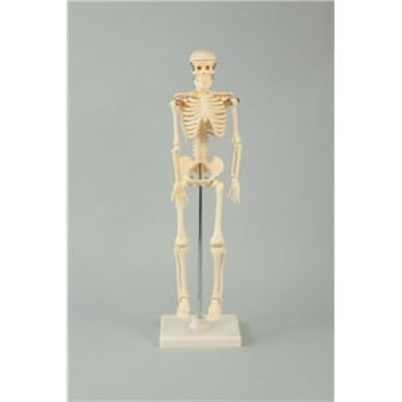 (まとめ)アーテック 人体骨格模型 42cm 【×5セット】