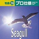 写森プロ仕様 Vol.38 Seagull