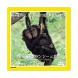 野生のチンパンジーと共に [DVD]