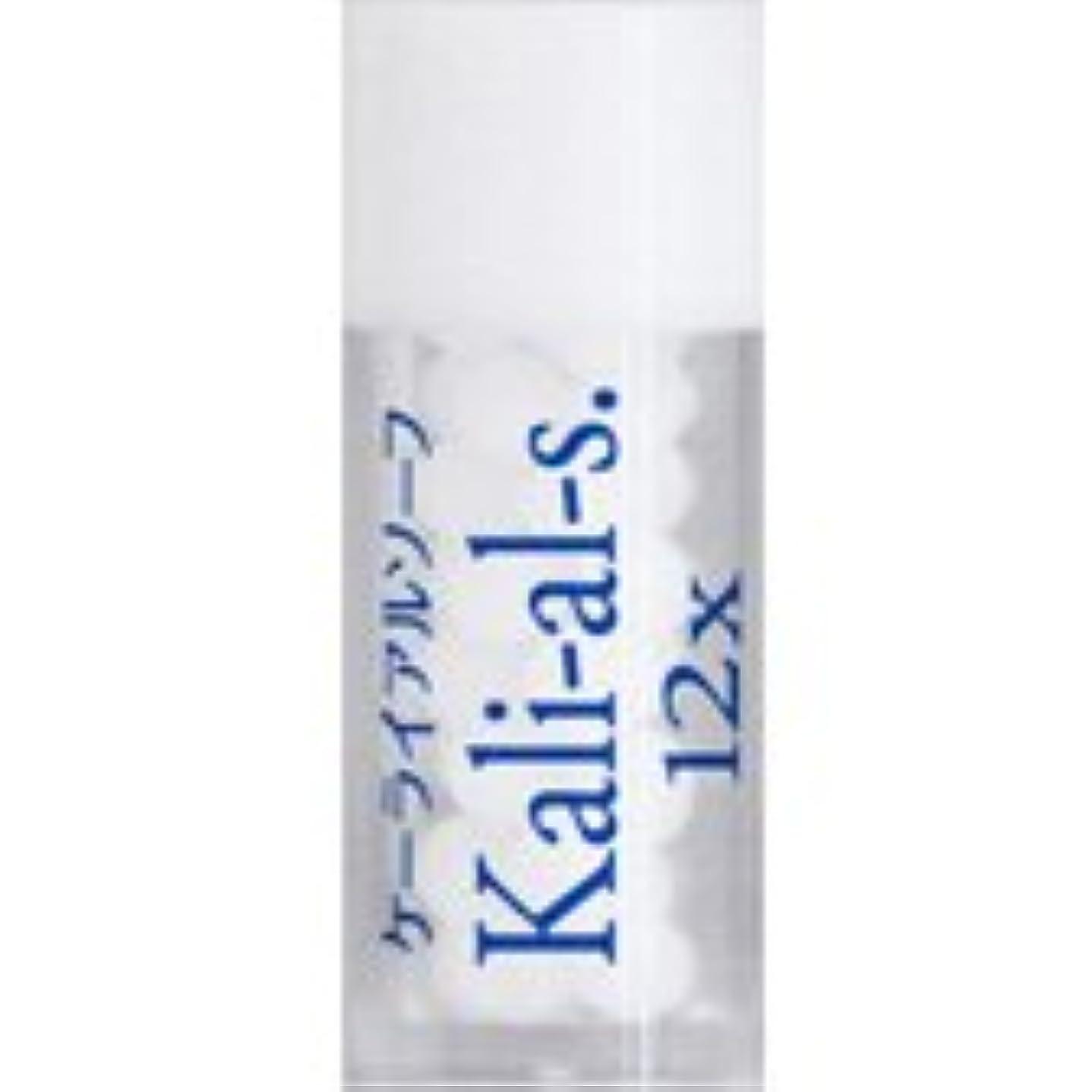 極端な媒染剤サリー36バイタルエレメントキット 対応 各種 (17)Kali-al-s.12X ケーライアルソーフ)