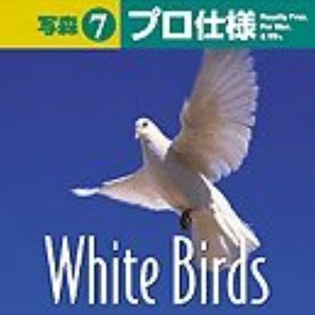 断線遅滞騙す写森プロ仕様 Vol.7 White Birds