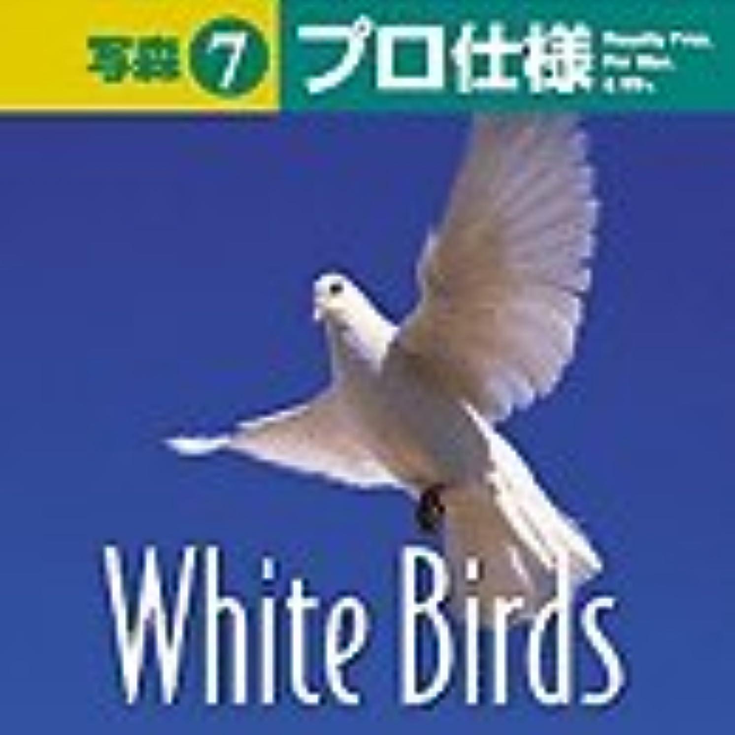 傾いた壁うれしい写森プロ仕様 Vol.7 White Birds