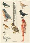 私家版鳥類図譜 (KCデラックス モーニング)の詳細を見る