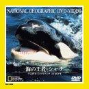 海の王者シャチ [DVD]