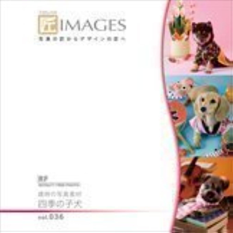 北へ不当外国人匠IMAGES Vol.036 歳時の写真素材 四季の子犬