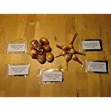12大種:アマンダ・ハーシュバーガー乗数タマネギ種子や種子オーガニック家宝