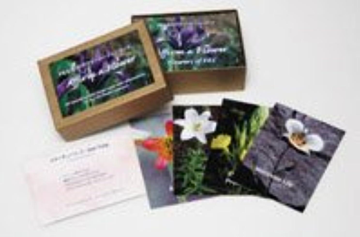 日記く逆さまにFESフラワーエッセンス アファメーションカード 103枚(日本版) (Flower Essence Society) 日本国内正規品
