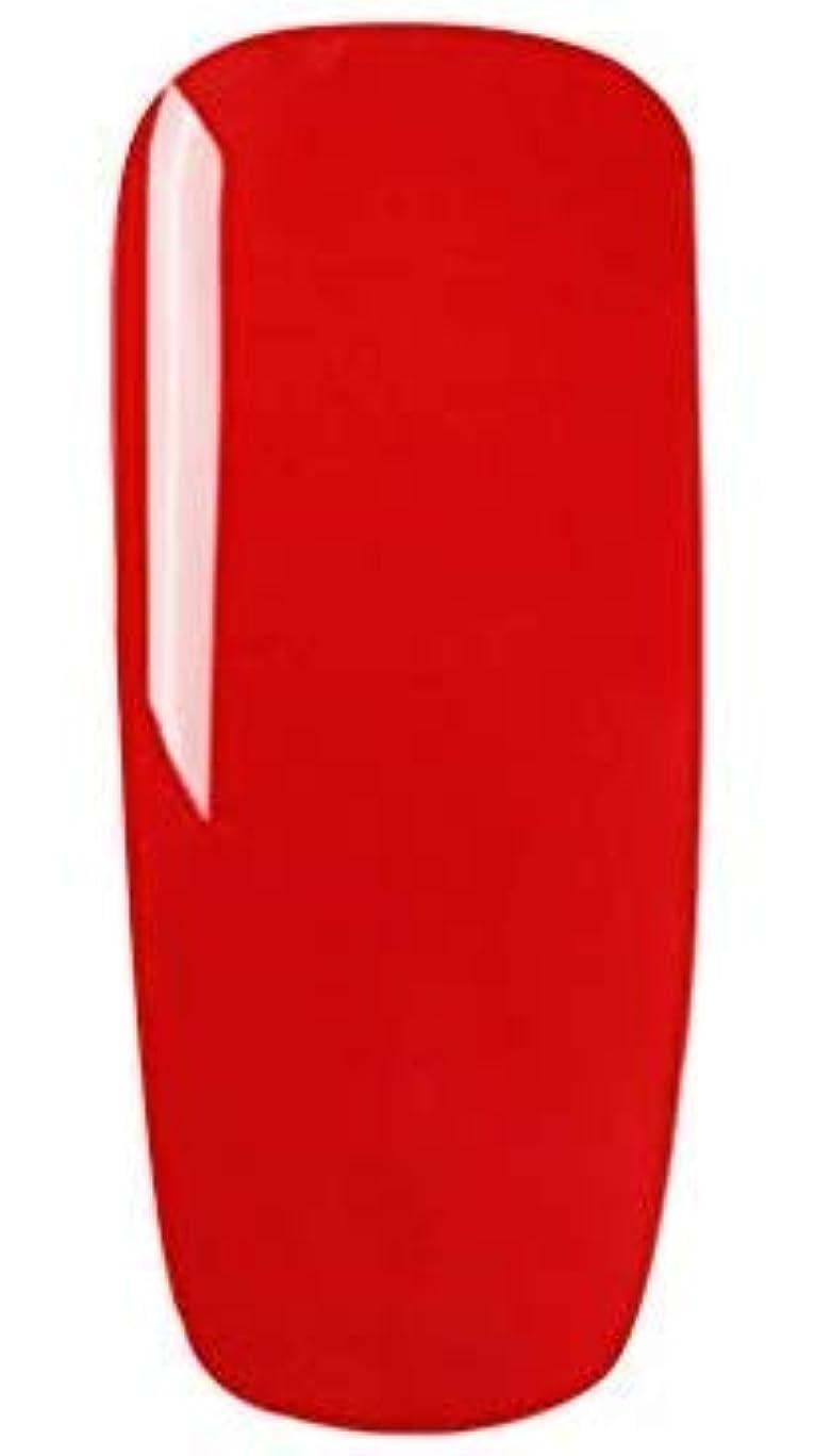 献身職業嵐カラージェル 10色套装 完璧なセット 8ml キャットアイジェルキット カメレオンカラージェルセット ジェルネイルカラー UV/LED 适用 ネイルアートジェルで簡単に DIY 下の色で10ボトルを自由に選ぶことができる