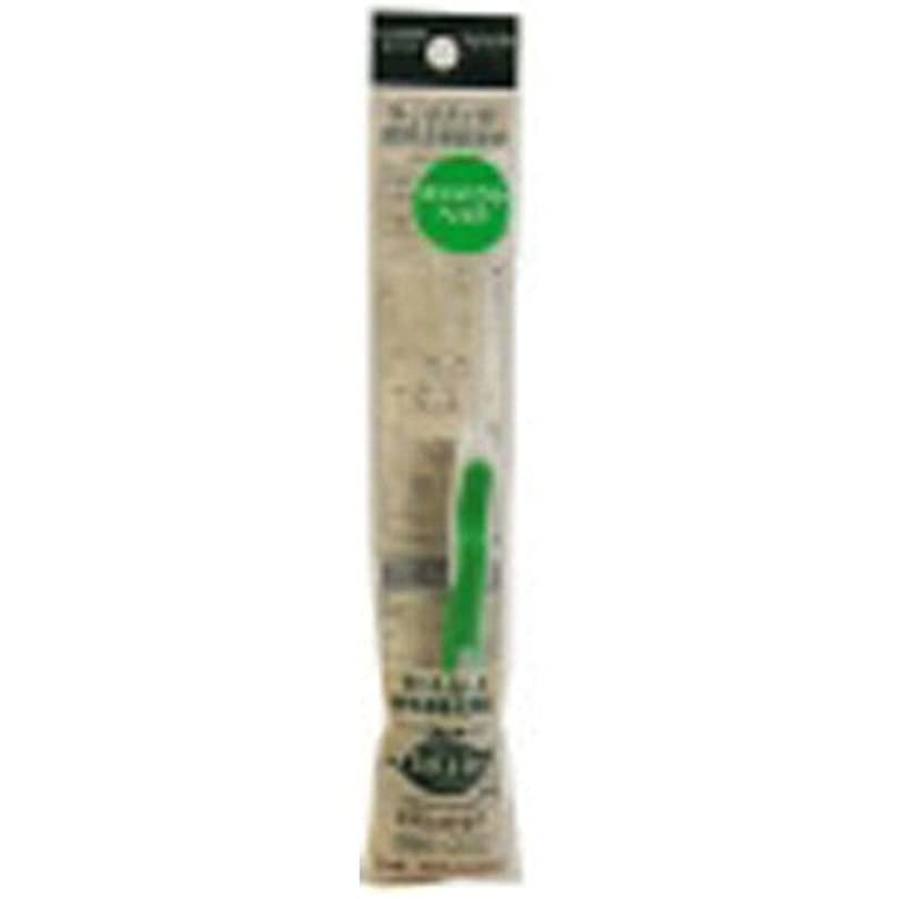 イソギンチャク慣習ホステルサレド ヘッド交換式歯ブラシ お試しセット コンパクトヘッド グリーン