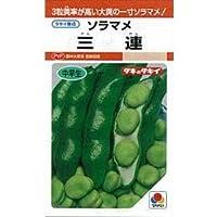 そら豆 種 三連 小袋(約40ml)