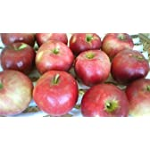 産地直送!山形産 紅玉りんご 28玉