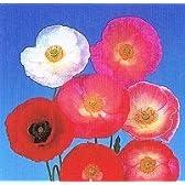 【耐寒性】 ポピー シャーレーダブル 2株セット  【イングリッシュガーデン】【花壇】