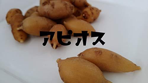 産地直送【冷凍】青森県 田子産 アピオス 500g×2