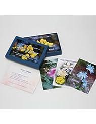 バッチアファメーションカード(38枚) 日本国内正規品