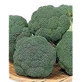 【ブロッコリー種子】ピクセル (サカタのタネ)コート5000粒