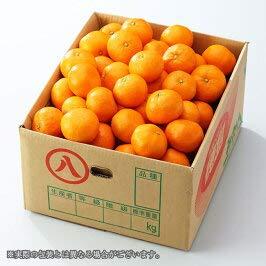 温州みかん 訳あり 大きさお任せ 5キロ 産地厳選 蜜柑 みかん ミカン