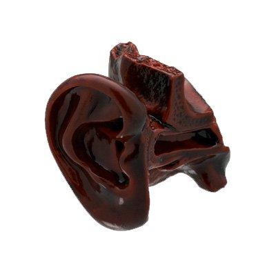 サイエンステクニカラー 人体模型ストラップ1 [12.耳の構造模型(溜塗調彩色) ](単品)