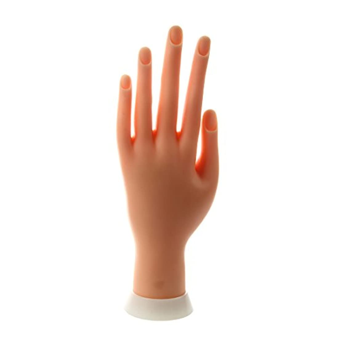 ギャラントリーストラトフォードオンエイボン農夫ACAMPTAR ACAMPTAR(R) ネイルアートの練習のためのモデル左手