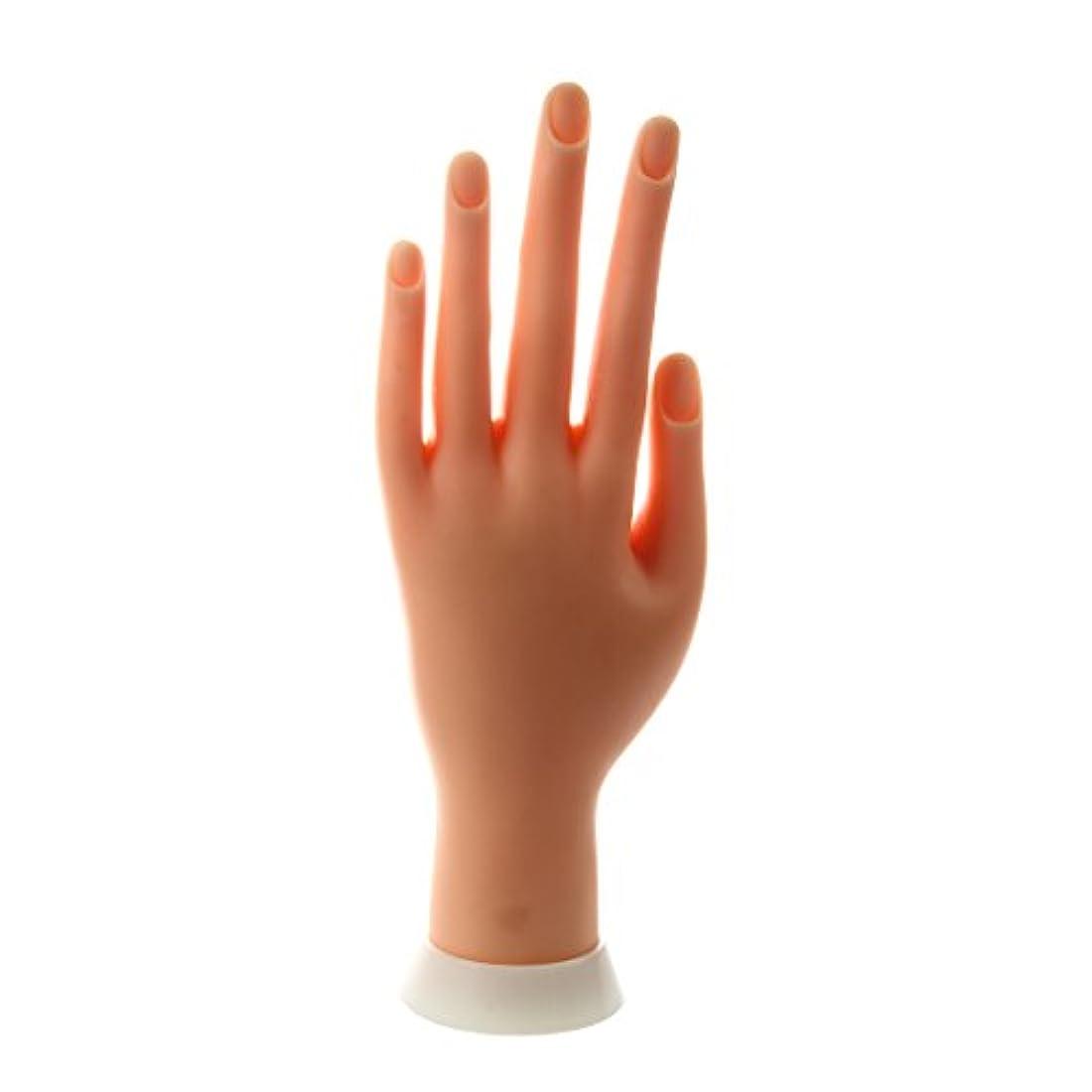 トランスミッションブラジャー拘束SODIAL(R) ネイルアートの練習のためのモデル左手