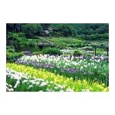 四季の詩 1000ピース 大和路の菖蒲 (奈良) (50cm×75cm、対応パネルNo.10)