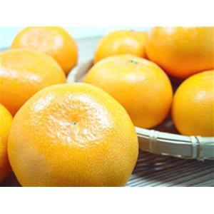 愛媛県産 柑橘 せとか 2Lサイズ(1個250g前後)8個