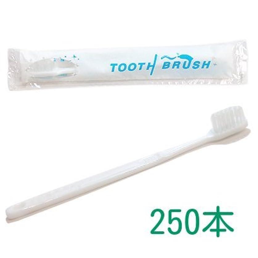 ソフィーマーティフィールディング孤独な業務用 粉付き歯ブラシ インスタント歯ブラシ 選べるセット 250本