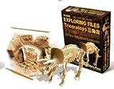 【気分は考古学者】トリケラトプス 骨格標本発掘キット 気分は考古学者! 思わず没頭してしまう恐竜 化石 発掘の気持ちをあなたへ