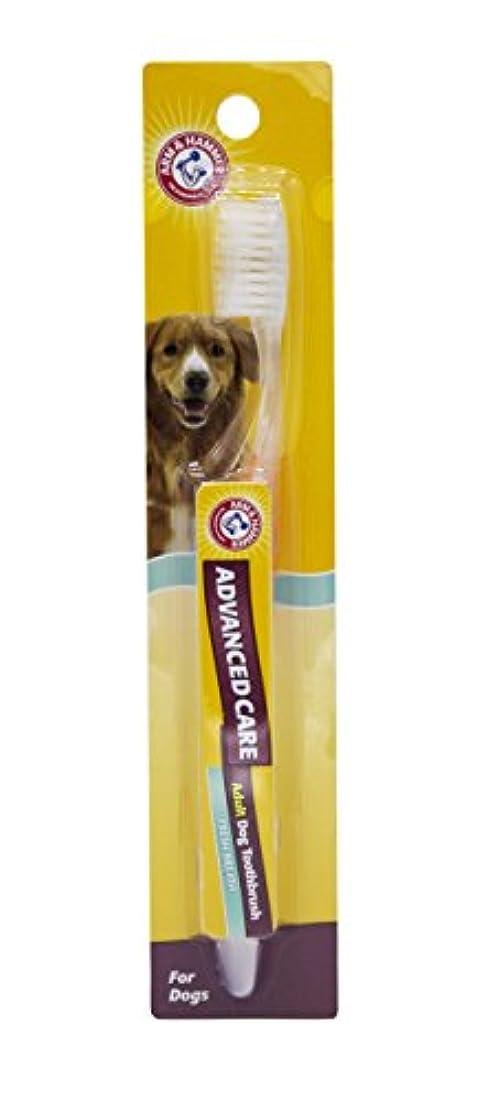 横ロッカー繁雑Arm & Hammer犬歯科Careリフトとロック歯ブラシfor Dogs Toothbrush FFP6971PS