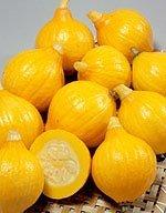 【カボチャ種子】フレッシュかぼちゃ コリンキー 6.5ml袋 (サカタのタネ)