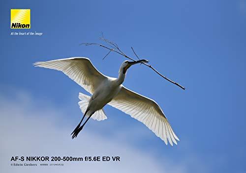 『Nikon 望遠ズームレンズ AF-S NIKKOR 200-500mm f/5.6E ED VR』の11枚目の画像