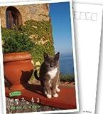 岩合光昭の世界ネコ歩き ソレントとカプリ島 ブルーレイ【NHKスクエア限定商品】