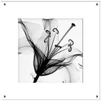 手軽に飾れる!E'S-Art Collection/ X-Ray Photograph(X線)/アートフレームSteven N.Meyers (スティーブン・マイヤーズ) Lily Muscadet