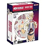 4D Master Transparent Human Anatomy Torso Model Kit, One Color by 4D Master