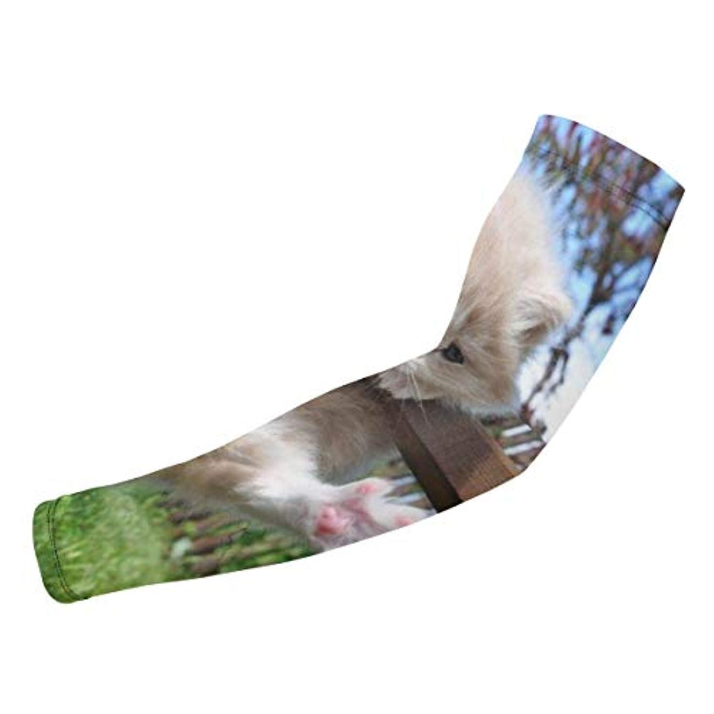 かる付属品情報かわいい夏の子猫草ユニセックス保護スリーブ-太陽の手袋カバー、アウトドアスポーツ1ペアの反UV日焼け止めクールアーム長い弾性