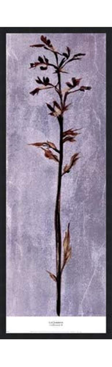 利得手書き自宅でCool Botanicals III by Liz Jardine – 12 x 38インチ – アートプリントポスター 12 x 36 Inch LE_265314-F101-12x38