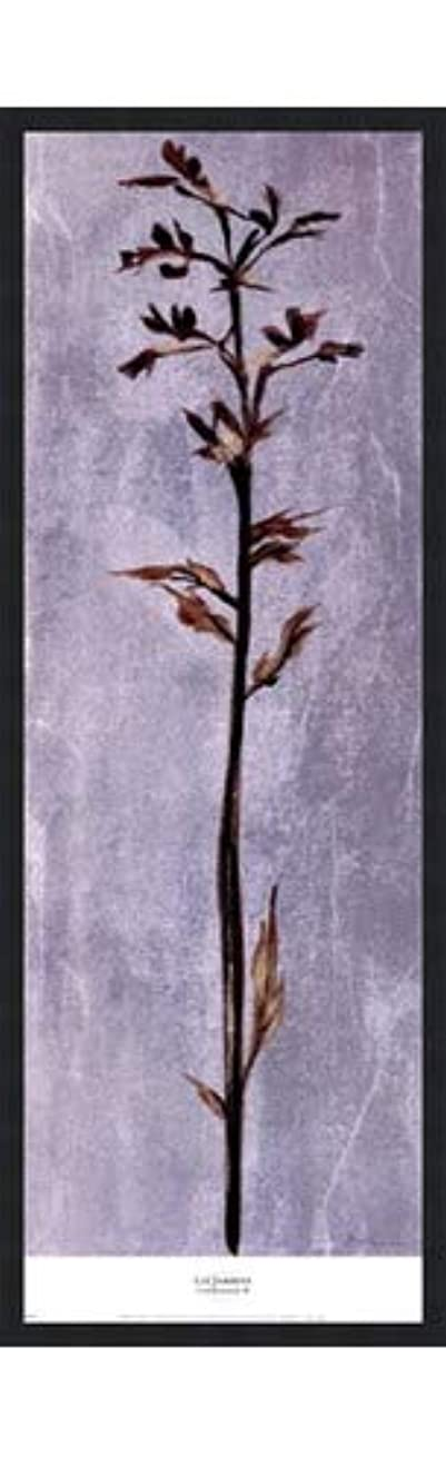 祈る認証ベアリングCool Botanicals III by Liz Jardine – 12 x 38インチ – アートプリントポスター 12 x 36 Inch LE_265314-F101-12x38