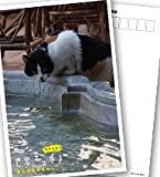 岩合光昭の世界ネコ歩き イスタンブール DVD【NHKスクエア限定商品】 画像