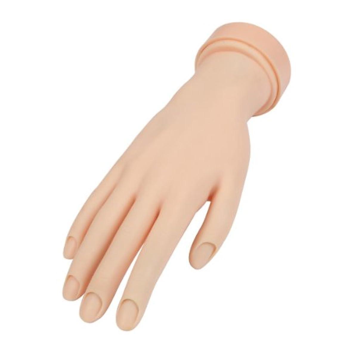 血統局かび臭いトレーニングハンド (ネイル用) 右手 [ 練習用マネキン 手 指 ハンドマネキン マネキン 施術 トレーニング ]