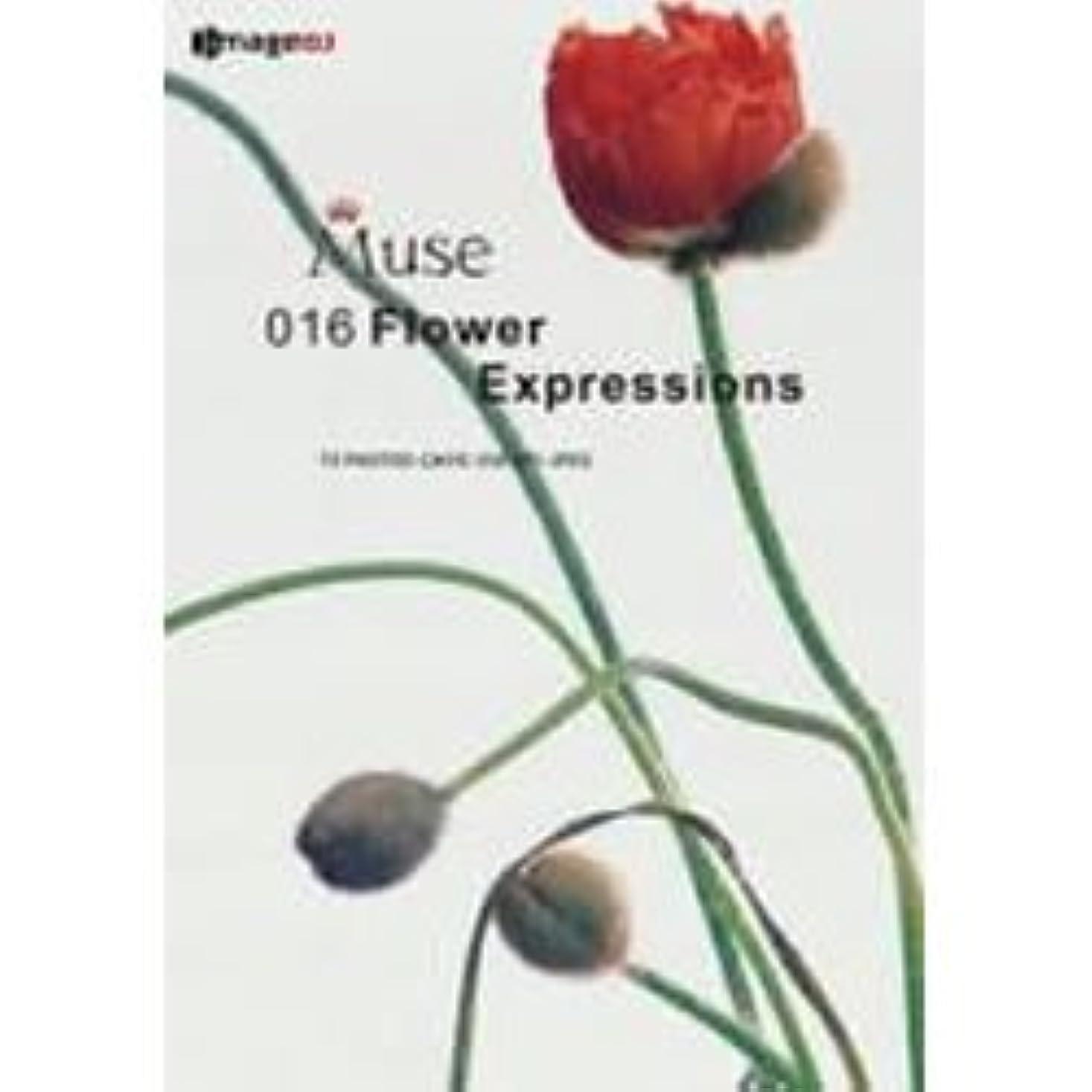 食物受け継ぐ休憩ミューズ Vol.16 花の表情