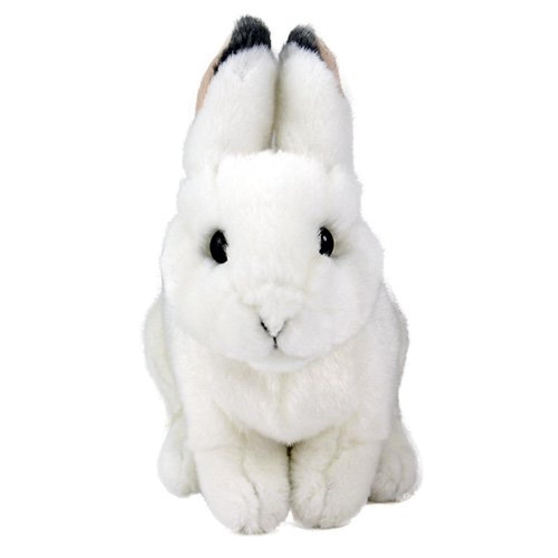 カロラータ ニホンノウサギ (冬毛) 赤ちゃん ぬいぐるみ (検針2度済み) 動物 リアルアニマルベイビー [やさしい手触り] お人形 10cm×17cm×19.5cm