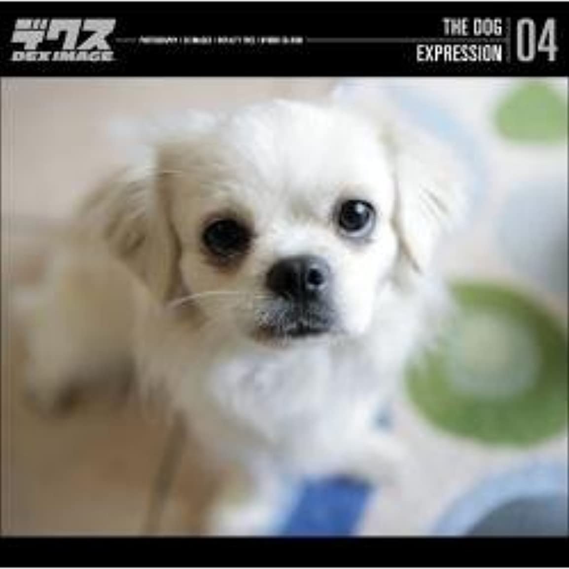 THE DOG 04 EXPRESSION