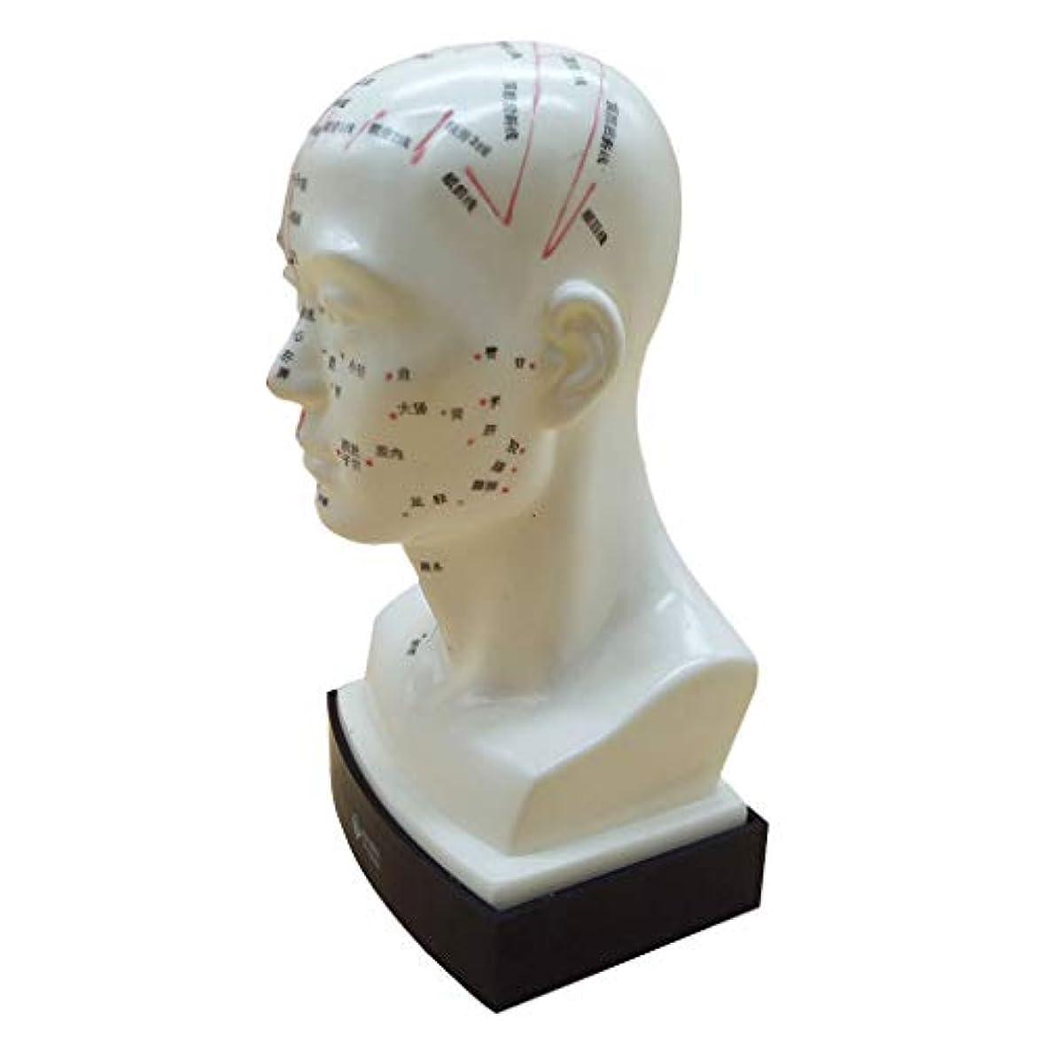ラジウム丘脈拍chiwanji 人間の頭鍼経絡モデルとポイントイン中国語のフリースタンディング