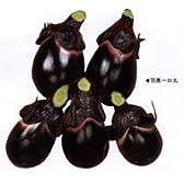 羽黒一口丸[茄子]【タネ】20ml