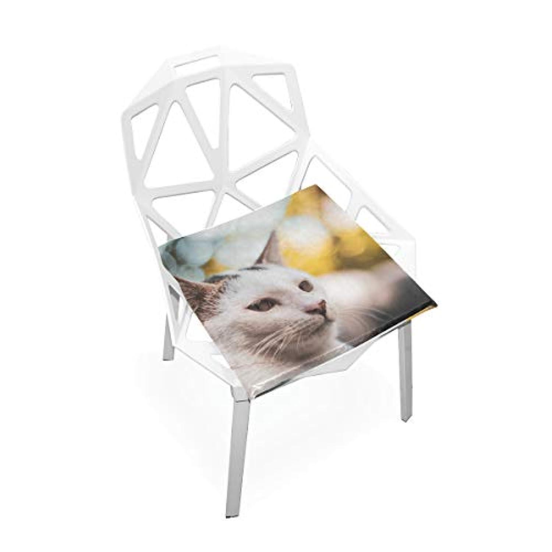 座布団 低反発 ねこ 考え ビロード 椅子用 オフィス 車 洗える 40x40 かわいい おしゃれ ファスナー ふわふわ fohoo 学校