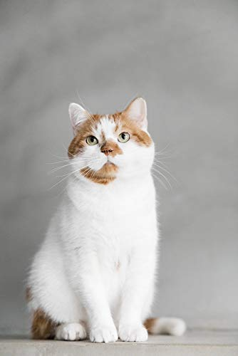 元・保護猫と世界一幸せに暮らす方法 ― 猫を飼うなら、もらいませんか?