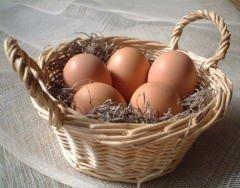 美野里たまご 加賀の朝日 120コ詰め 新鮮卵 健康卵