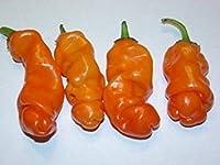 25個の種子ピーターペッパーオレンジ家宝ホット・チリ・XXX陽気なレアユニークなギフト!