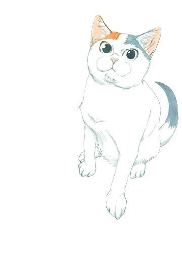 拾い猫のモチャの詳細を見る