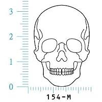 人体図ゴム印 頭蓋正面-M 154